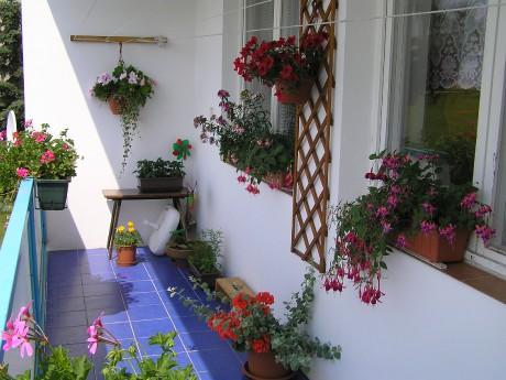 Květiny na balkon jih